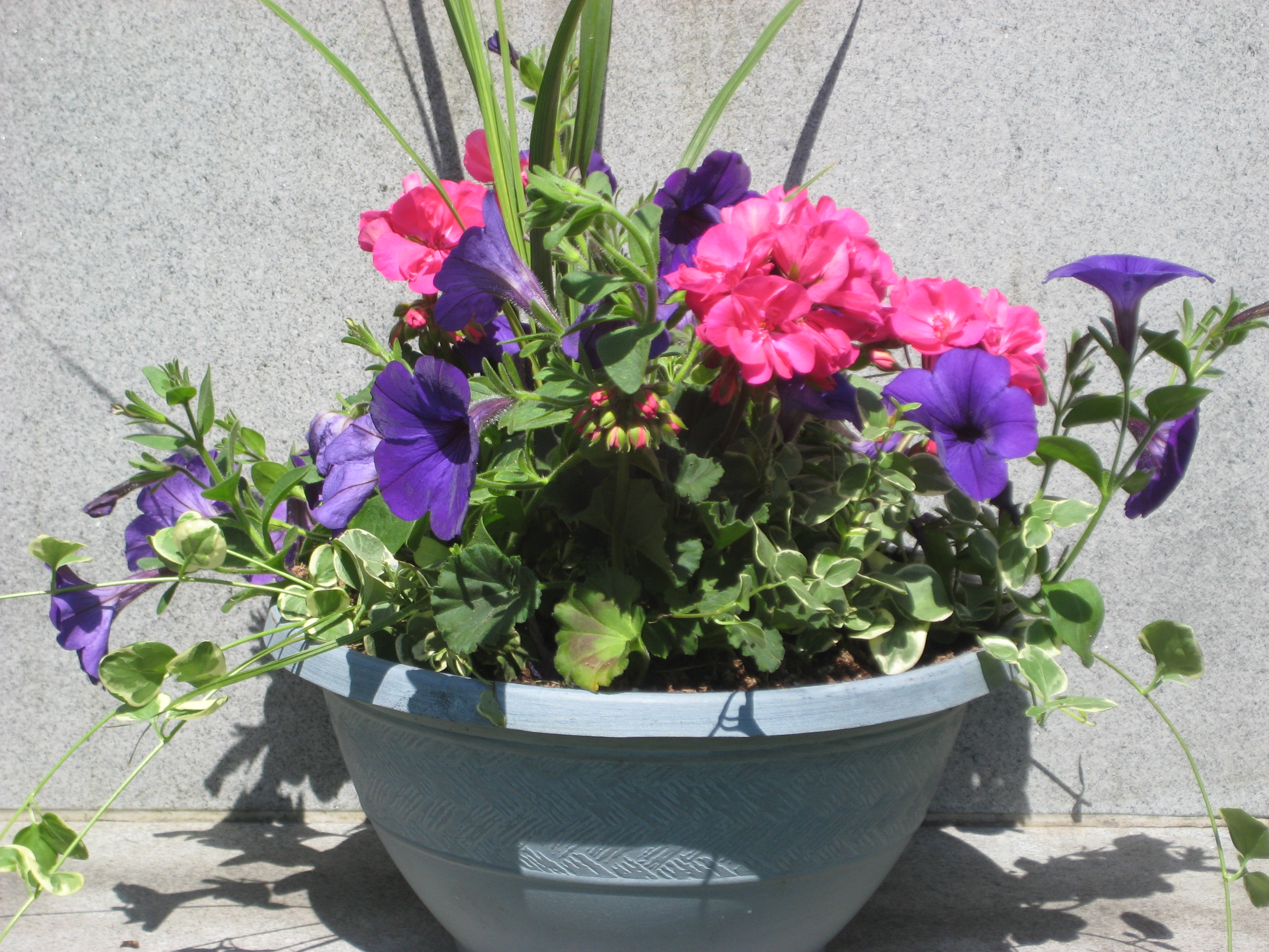 Mother's Day Live Potted Plant - Grave